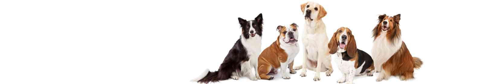 Pet Grooming Nov 18 16